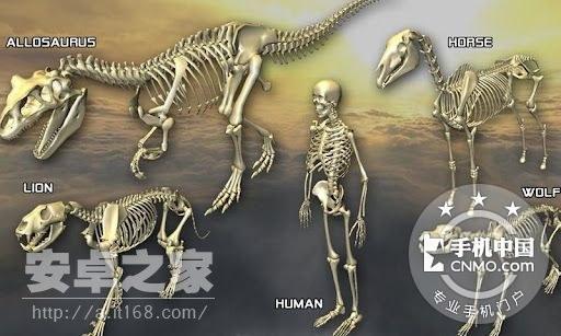 3D骨骼拆解 v2.2 在3D场景中,学习骨骼的构造原理第5张图 手机中国